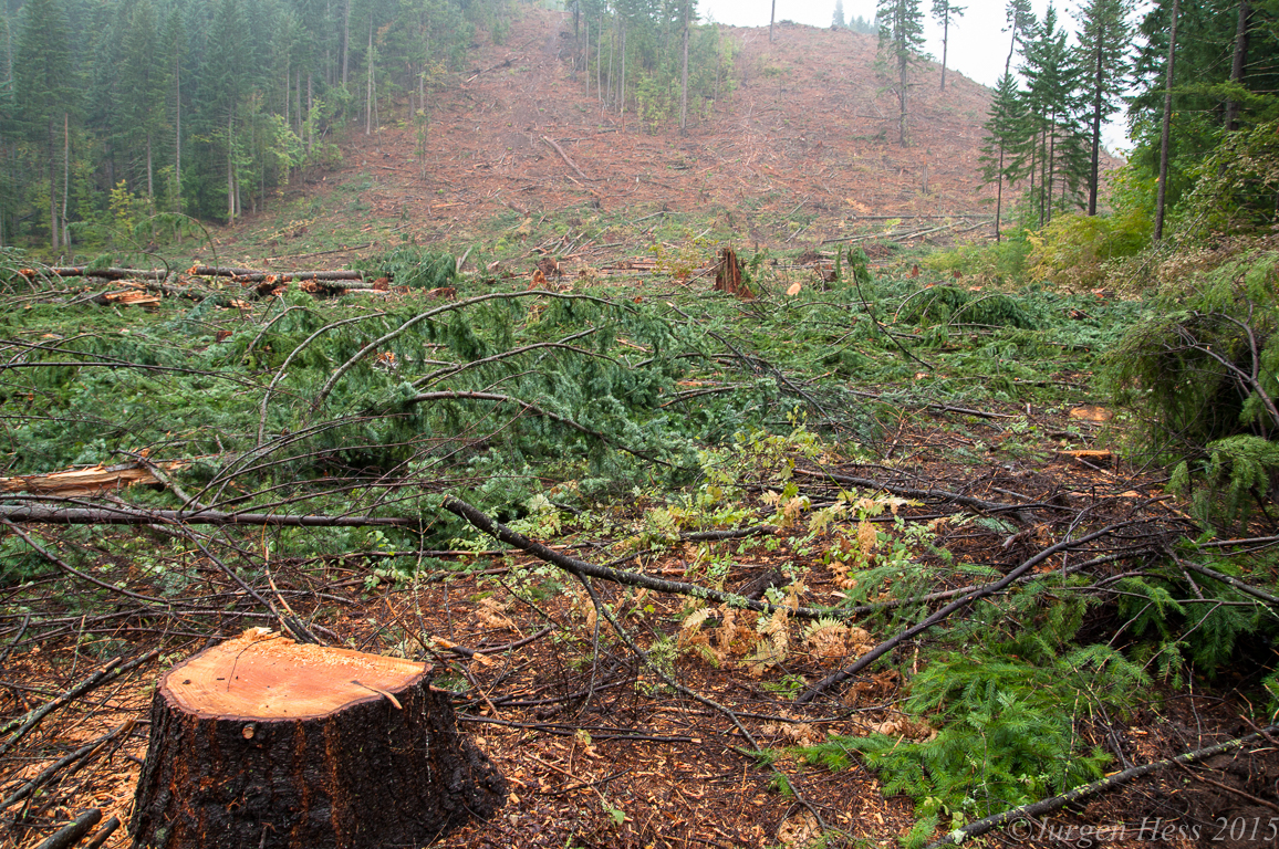 Forestry Clearcut Hwy 141 0038